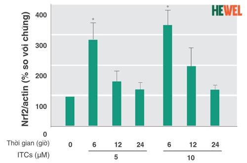 Wasabia Japonica kích hoạt Nrf2 tăng gấp 3 lần giúp kiểm soát tế bào Kupffer