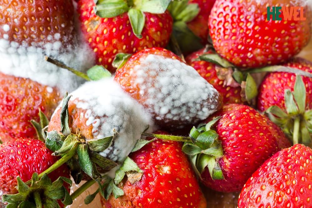 Aflatoxin B có trong thực phẩm ẩm mốc có thể gây ung thư gan