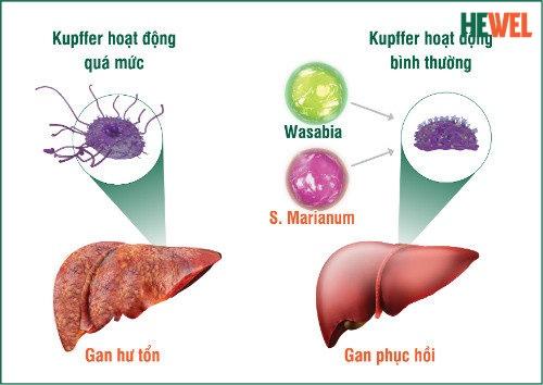 Hình ảnh Những lưu ý trong điều trị bệnh viêm gan C