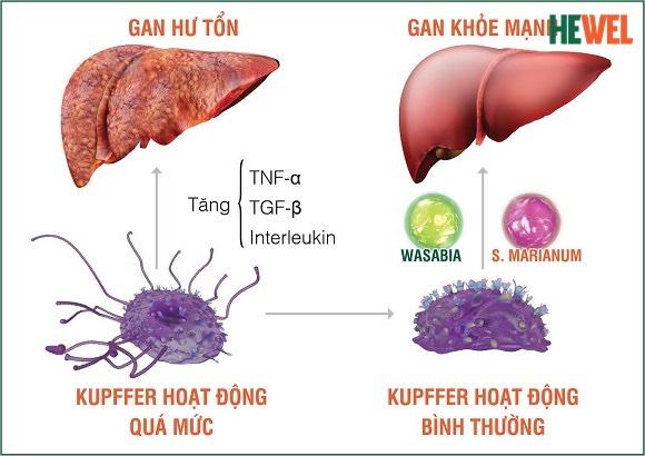 biến chứng ung thư gan
