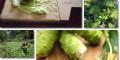 HEWEL – Tăng cường giải độc, giữ lá gan khỏe...