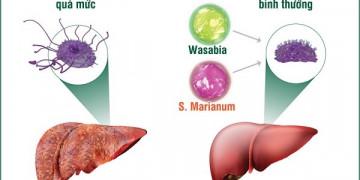Kiểm soát nhân tố bí ẩn: cách cải thiện bệnh gan từ gốc