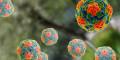 Bệnh viêm gan A có nguy hiểm không?